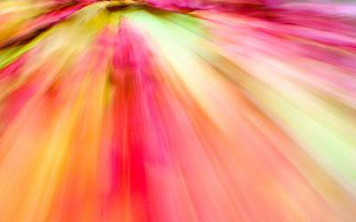 Autumn Foliage 10 Art Print