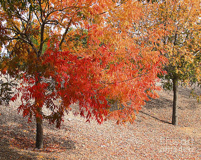 Photograph - Autumn Foliage by Richard J Thompson