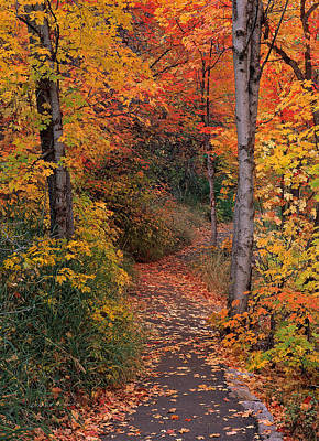 Colorful Leaves Photograph - Autumn Foot Path by Leland D Howard