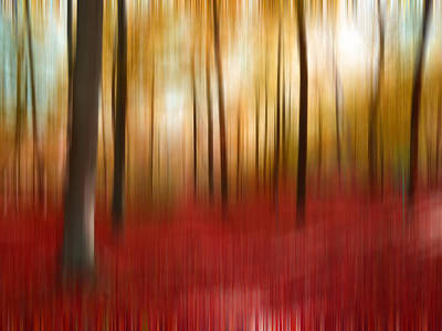 Photograph - Autumn Forest by Angela Bruno