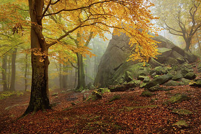 Ore Photograph - Autumn Forest by Daniel ?e?icha