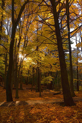 Autumn Forest Glow - Impressions Of Fall Print by Georgia Mizuleva