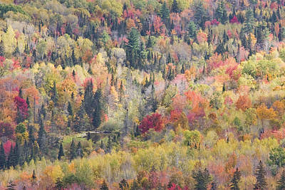 Photograph - Autumn Forest Landscape In Mount Blue State Park Weld Maine by Keith Webber Jr