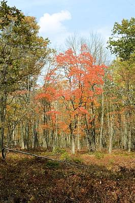 Photograph - Autumn Forest - Marion Brooks Natural Area by Joel E Blyler