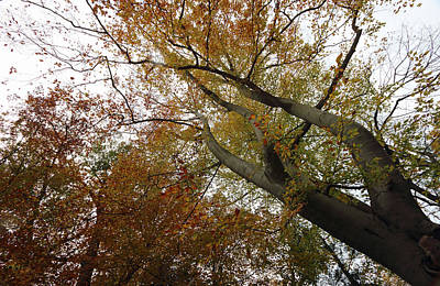 Photograph - Autumn Forest by Mary Haber