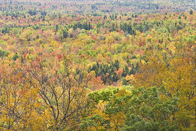 Photograph - Autumn Forest Mount Blue State Park Weld Maine by Keith Webber Jr