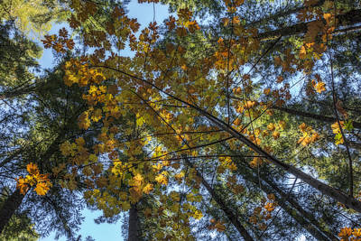Photograph - Autumn Forest One by Loree Johnson