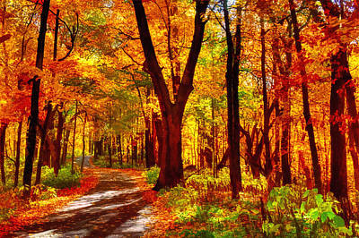 Photograph - Autumn Forest Path by Roger Passman