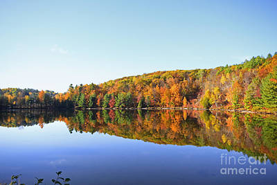 Photograph - Autumn Forest Reflections by Charline Xia