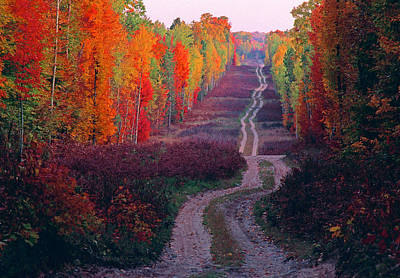 Autumn Forest Road Art Print by Dennis Cox WorldViews