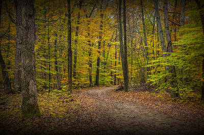 Photograph - Autumn Forest Roadway by Randall Nyhof