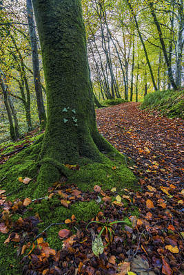Photograph - Autumn Forest Walk by Ian Mitchell
