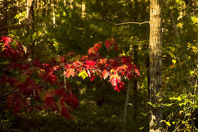 Photograph - Autumn  by Frank Winters