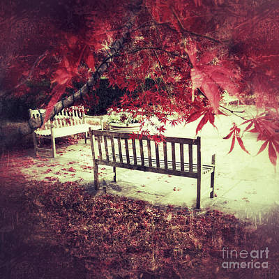 Photograph - Autumn Garden by Chris Scroggins
