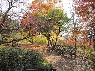 Photograph - Autumn Garden by Kathie Chicoine