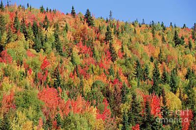 Autumn In Gaspesie Natl Park Quebec Art Print by Yva Momatiuk John Eastcott