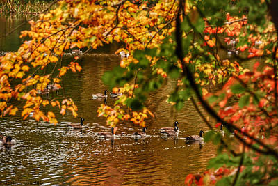 Autumn Geese Abstract Art Print by Kathi Isserman