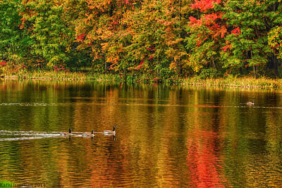 Photograph - Autumn Geese by Kathi Isserman
