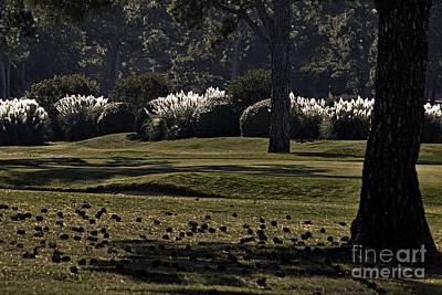 Pine Cones Photograph - Autumn by Gerlinde Keating - Galleria GK Keating Associates Inc