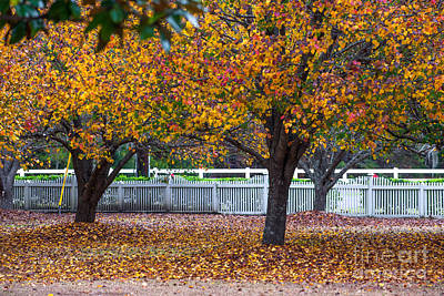Photograph - Autumn Glory by Dale Powell
