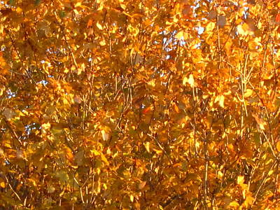 Autumn Glory Art Print by Ellie Waligurski