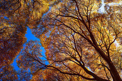 Photograph - Autumn Glory by Jenny Rainbow