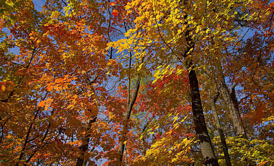 Autumn Glory Art Print by Larry Bohlin