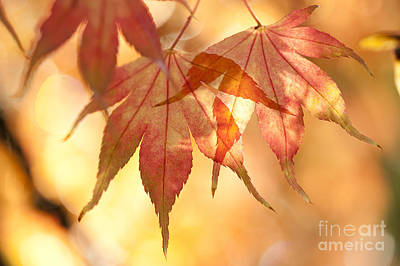 Autumn Glow Art Print by Anne Gilbert