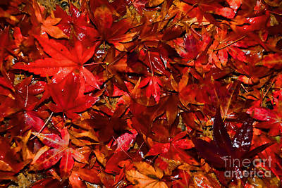 Autumn Glow By Kaye Menner Art Print by Kaye Menner