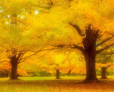 Photograph - Autumn Glow by Michael Hubley