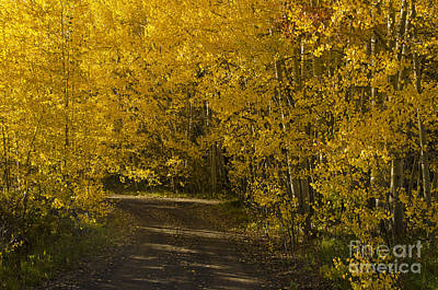 Photograph - Autumn Glow On Grand Mesa by Kelly Black