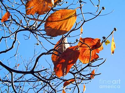 Photograph - Autumn Glow by Robyn King