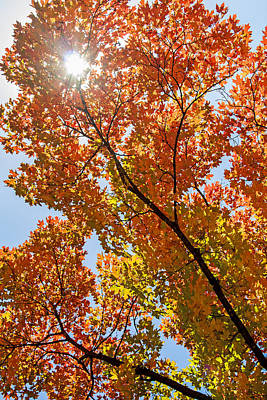 Photograph - Autumn Glowing Through The Leaves by Deb Buchanan