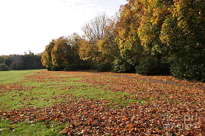 Autumns Gold 4 Art Print