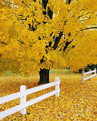 Photograph - Autumn Gold by Alan L Graham