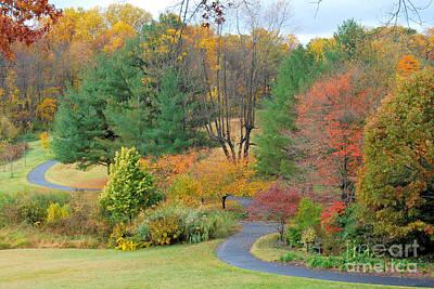 Photograph - Autumn Gold by Eva Kaufman