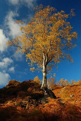 Photograph - Autumn Gold by Gavin Macrae