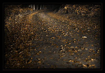 Photograph - Autumn Gold by John Stephens