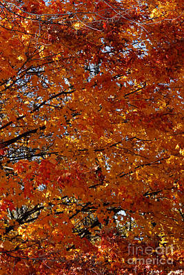 Photograph - Autumn Gold by Linda Shafer