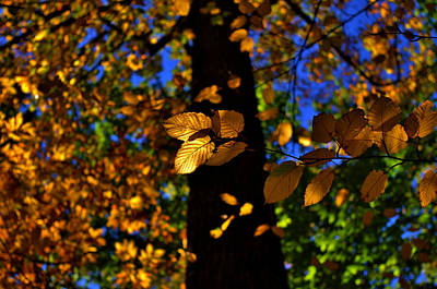 Photograph - Autumn Gold by Robert Geary