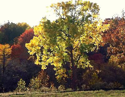 Photograph - Autumn Gold by Steve Karol