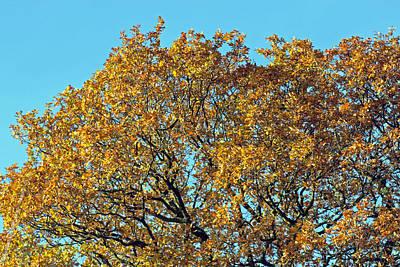 Photograph - Autumn Gold by Tony Murtagh