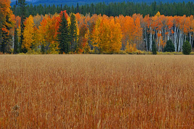 Photograph - Autumn Golden Fields And Aspens Grand Teton National Park by Schwartz Nature Images