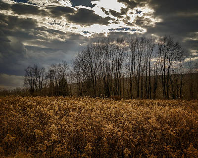Photograph - Autumn Goldenrod by Chris Bordeleau