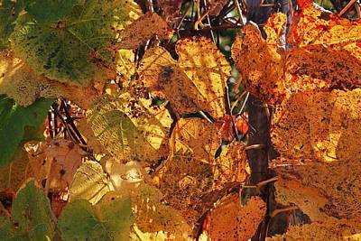 Photograph - Autumn Grape Leaves by Michael Saunders