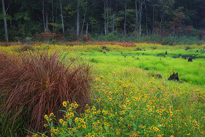 Photograph - Autumn Grass by Bill Wakeley