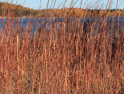 Photograph - Wild Grass At Wachusett Reservoir 3 by Michael Saunders