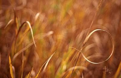Photograph - Autumn Grasses by Jim Vance