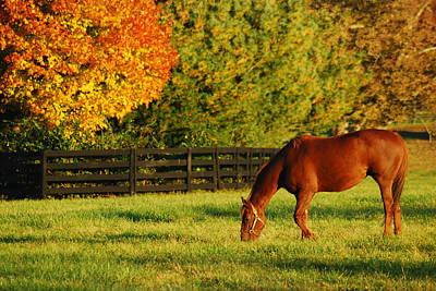 Autumn Grazing Art Print by James Kirkikis