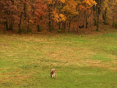 Photograph - Autumn Grazing by Wild Thing